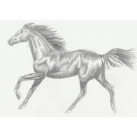 Horse Template